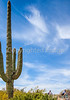 Sojourn cyclists in Saguaro NP East - D2-C2-0058 - 72 ppi