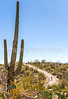 Cyclist(s) in Saguaro Nat'l Park, Arizona - 3-15 - C3 -0004 - 72 ppi