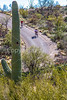 Cyclist(s) in Saguaro Nat'l Park, Arizona - 3-15 - C3 -0051 - 72 ppi