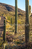 Cyclist(s) in Saguaro Nat'l Park, Arizona - 3-16 - C1 -0068 - 72 ppi  #2