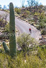 Cyclist(s) in Saguaro Nat'l Park, Arizona - 3-15 - C3 -0061 - 72 ppi