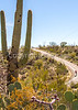 Cyclist(s) in Saguaro Nat'l Park, Arizona - 3-15 - C3 -0005 - 72 ppi