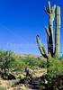 Cactus Forest Trail in Saguaro Nat  Pk , AZ - 41 - 72 ppi-2
