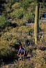 Cactus Forest Trail in Saguaro Nat  Pk , AZ - 58 - 72 ppi