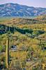 Cactus Forest Trail in Saguaro Nat  Pk , AZ - 12 - 72 ppi