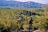 Cactus Forest Trail in Saguaro Nat  Pk , AZ - 11 - 72 ppi