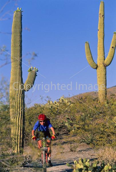 Cactus Forest Trail in Saguaro Nat  Pk , AZ - 47 - 72 ppi