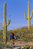 Cactus Forest Trail in Saguaro Nat  Pk , AZ - 47 - 72 ppi