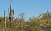 Cyclist(s) in Saguaro NP east, AZ - D1-C1 #2-0048 - 72 ppi