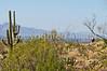 Cyclist(s) in Saguaro NP east, AZ - D1-C1 #2-0222 - 72 ppi