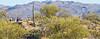Cyclist(s) in Saguaro NP east, AZ - D1-C1-0108 - 72 ppi