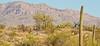 Cyclist(s) in Saguaro NP east, AZ - D1-C1 #2-0089 - 72 ppi