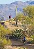 Cyclist(s) in Saguaro NP east, AZ - D1-C1-0103 - 72 ppi-2