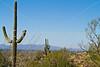 Cyclist(s) in Saguaro NP east, AZ - D1-C1 #2-0223 - 72 ppi