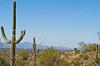 Cyclist(s) in Saguaro NP east, AZ - D1-C1 #2-0218 - 72 ppi