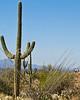 Cyclist(s) in Saguaro NP east, AZ - D1-C1 #3-0027 - 72 ppi