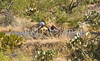 Cyclist(s) in Saguaro NP east, AZ - D1-C1 #2-0183 - 72 ppi