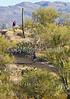 Cyclist(s) in Saguaro NP east, AZ - D1-C1-0103 - 72 ppi