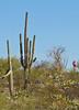 Cyclist(s) in Saguaro NP east, AZ - D1-C1 #2-0062 - 72 ppi