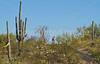 Cyclist(s) in Saguaro NP east, AZ - D1-C1 #2-0058 - 72 ppi