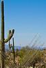 Cyclist(s) in Saguaro NP east, AZ - D1-C1 #3-0035 - 72 ppi-2