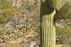 Cyclist(s) in Saguaro NP east, AZ - D1-C1 #2-0170 - 72 ppi
