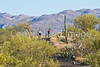 Cyclist(s) in Saguaro NP east, AZ - D1-C1-0109 - 72 ppi