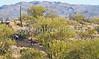 Cyclist(s) in Saguaro NP east, AZ - D1-C1-0105 - 72 ppi