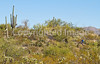 Cyclist(s) in Saguaro NP east, AZ - D1-C1 #2-0102 - 72 ppi