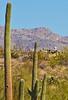 Cyclist(s) in Saguaro NP east, AZ - D1-C1 #2-0066 - 72 ppi