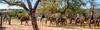 Rancho de la Osa Guest Ranch, Sasabe, AZ - D4 - C3-0093 - 72 ppi-2