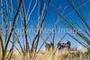 Rancho de la Osa Guest Ranch, Sasabe, AZ - D4 - C3-0171 - 72 ppi