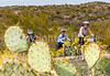 Sojourn cyclists in Saguaro NP East - D2-C2-0041 - 72 ppi