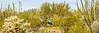 Sojourn cyclists in Tucson Mountain Park - D3 - C3- - 72 ppi-5