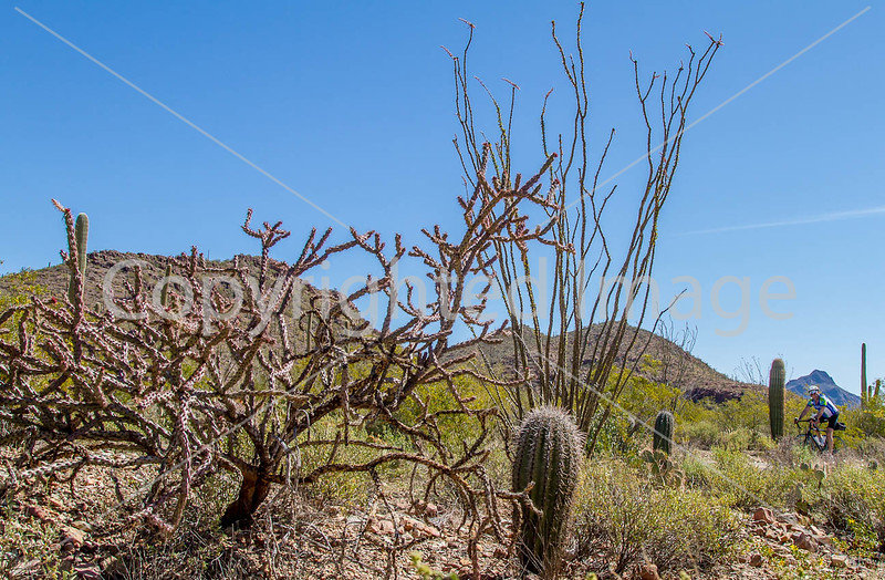 Sojourn cyclists in Tucson Mountain Park - D3 - C3-0221 - 72 ppi