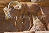 Arizona-Sonora Desert Museum - D2-C1-0029 - 72 ppi-2