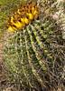 Arizona-Sonora Desert Museum - D2-C3 -0036 - 72 ppi