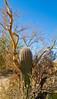Arizona-Sonora Desert Museum - D2-C3 -0174 - 72 ppi