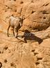Arizona-Sonora Desert Museum - D2-C1-0070 - 72 ppi