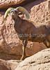 Arizona-Sonora Desert Museum - D2-C1-0047 - 72 ppi