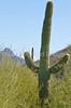 Arizona-Sonora Desert Museum - D2-C1-0084 - 72 ppi