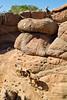 Arizona-Sonora Desert Museum - D2-C3 -0059 - 72 ppi