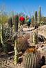 Arizona-Sonora Desert Museum - D2-C3 -0107 - 72 ppi