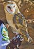 Arizona-Sonora Desert Museum - D2-C3 -0007 - 72 ppi