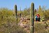 Arizona-Sonora Desert Museum - D2-C3 -0091 - 72 ppi