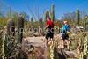 Arizona-Sonora Desert Museum - D2-C3 -0102 - 72 ppi