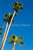Palms above St  Augustine Cathedral, Tucson, AZ - C3-0017 - 72 ppi