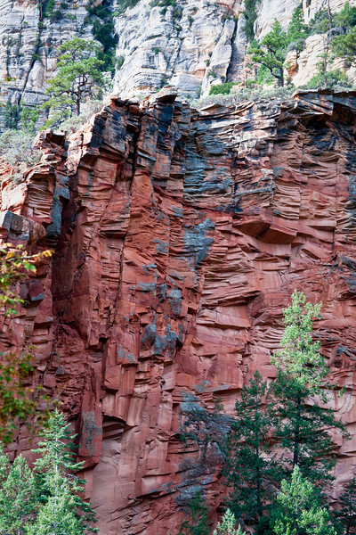 AZ 050                         Juniper trees stand out against the sandstone walls of Oak Creek Canyon near Sedona, Arizona.