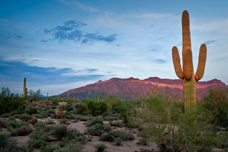 AZ 053                           Sunset light on saguaro cactus and Usery Mountain, Usery Mountain Regional Park, Mesa, Arizona.