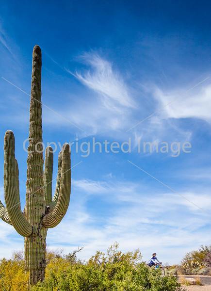 Sojourn cyclists in Saguaro NP East - D2-C2-0056 - 72 ppi